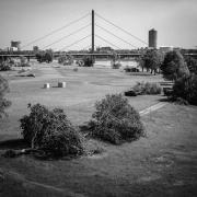 umgefallene Bäume am Rhein
