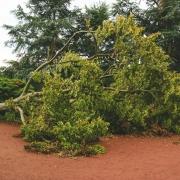 umgefallene Magnolie im Nordpark